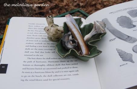 arnosky shells