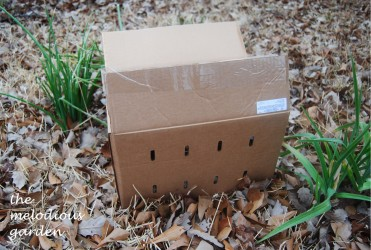 daylily box