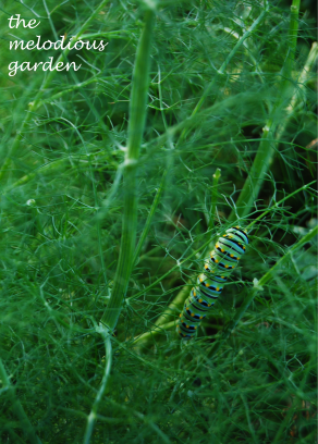 caterpiller june 1