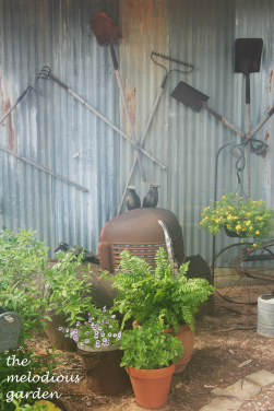 lavenderfarm11